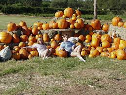 North Lawrence Pumpkin Patch by The 10 Best Pumpkin Patches In Texas In 2016