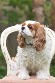 Guard Dogs That Dont Shed by 121 Best Dog Breeds Images On Pinterest Animals Dog Breeds And