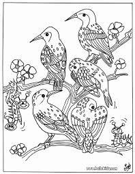 Owls Bird Coloring Page