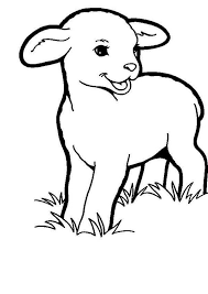 Baby Lamb Coloring Pages