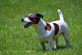 Pumpkin Rice For Dog Diarrhea by Sudden Diarrhea In Dogs Symptoms Causes Diagnosis Treatment
