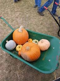 Chatham Kent Pumpkin Patches by Pyo Pumpkins Rochester All You Need To Know Before You Go