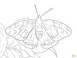 Click Butterfly Coloring Pages View Printable Version Color Compatible Android Tablets Free Page Monarch Life Cycle