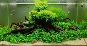 Beautiful-aquascape-designs-for-aquariums-with-green-plants-inside ... Aquascaping Fish Tank Projects Aquadesign George Farmers Live Aquascaping Event At Crowders Ipirations Mzanita Driftwood For Inspiring Futuristic Home Planted Riddim By Alejandro Menes Aquarium Design Contest Ada Horn Wood Beautiful Natural Hardscape For Superwens 2012 Aquascape Petrified Youtube Fish Aquariums The Worlds Best Planted Aquarium Products Designs Reviews Out Of Ideas How To Draw Inspiration From Others Aquascapes 7 Wood Images On Pinterest Sculpture Lab Tutorial Nano Cube Size 20 X 25h