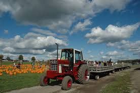Bengtsons Pumpkin Patch Homer Glen Il by Pumpkin Farm Why So Many People From Chicago Come Visit Us
