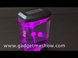 Jellyfish Mood Lamp Amazon by แมงกระพร น Jellyfish Mood Lamp Youtube Gadget Pinterest
