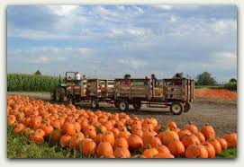 Kent Island Pumpkin Patch by Photo Gallery Pumpkin Patch Carpinito Brothers
