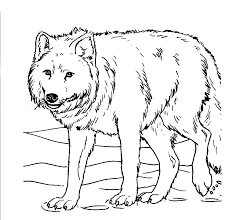 Beagle Coloring Pages Realistic Puppy Wolf Grey Best