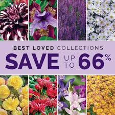 brecks premium flower bulbs shop now for iris day daffodil