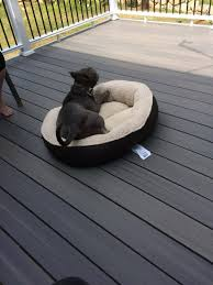 my dog s choice in dog beds momknowsbest2