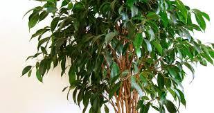 plantes vertes d interieur choisir les plantes vertes d intérieur