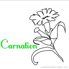 Flower Coloring Sheets A Z Carnation