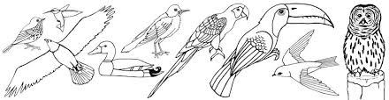 Full Size Of Coloring Pagecoloring Page Birds Gorgeous Header Bird