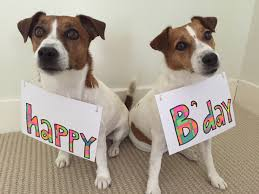 Jack Russell Birthday Greeting | Jack Russell | Pinterest ... Jack Russell Gracie Sold To Chris Dearmon Snow Creek 1813 Best Triers Images On Pinterest 743 Russell Long Haired Jack Trier Puppies For Sale In Kent Google The Russellcolbath Historic Homestead Site The White Mountains New Hampshire Kancamagus Highway Northern England Villages Cute Trier Dog On Stock Photo 574920391 Shutterstock Farm Photos Images Alamy Male Teacup Chihuajack Russellix Lantern Pictures Jackhua 1588