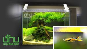 Black-Bar Endler – The Highest Class N - Poecilia Wingei - YouTube I Really Want A Jellyfish Aquarium Home Pinterest Awesome Fish Tank Idea Cool Ideas 6741 The Top 10 Hotel Aquariums Photos Huffpost Diy Barconsole Table Mac Marlborough Tank Stand Alex Gives Up Amusing Experiments 18 Best Fish Images On Aquarium Ideas Diy Clear For Life Hexagon Hayneedle Bar Custom Tanks Ponds Designs For Freshwater Modern 364 And Tropical Ov Cylinder 2