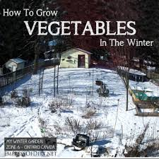 Did You Know You Can Grow Vegetables In The Winter? | Gardens ... 484 Best Gardening Ideas Images On Pinterest Garden Tips Best 25 Winter Greenhouse Ideas Vegetables Seed Saving Caleb Warnock 9781462113422 Amazoncom Books Small Patio Urban Backyard Slide Landscaping Designs Renaissance With Greenhouse Design Pafighting Fall Lawn Uamp Gardening The Year Round Harvest Trending Vegetable This Is What Buy Vegetables Fresh And Simple In Any Plants Home Ipirations