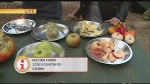 Best Apple Hill Pumpkin Patch by Delfino Farms Apple Hill Pt 3 Youtube