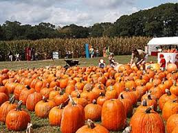 Southeast Wisconsin Pumpkin Patches by 36 Best Pumpkin Patches Images On Pinterest Pumpkin Patches
