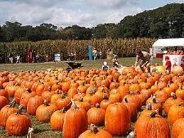 Pumpkin Patches Near Colorado Springs Co by 36 Best Pumpkin Patches Images On Pinterest Farm Houses Tourism