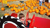 Livermore Pumpkin Patch by Pumpkin Patch At Joan Farm In Livermore Youtube