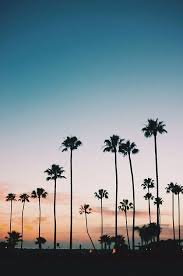 Destinations We Love Xx LA California Palm Trees Sunset Travel Honeymoon