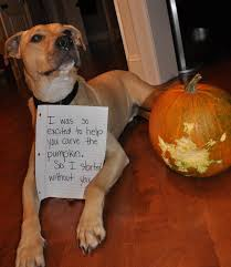 Dog Diarrhea Pumpkin by Pumpkin Mania 8 Classic U0026 Creative Uses For Your Holiday Squash