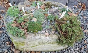 Field Trip Alaska Botanical Garden – awkward botany