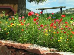 Evergreen Garden Club Free Images Blossom Lawn Flower Bloom Backyard Botany Go Native Or Wild News Creating A Wildflower Meadow From Part 1 Youtube Wildflower Garden Update Life In Pearls And Sports Bras Budapest Domestic Integrity Field Of Wildflowers She Shed Decorating Ideas How To Decorate Your Backyard Pics Best 25 Meadow Garden Ideas On Pinterest Rockoakdeer Neighborhood For National Week About Texas A Whole Wildflowers For Tears The Duster Today Fields Flowers Design With Apartment Balcony