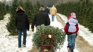 Image For Where To Cut Your Own Christmas Tree In Los Angeles Article