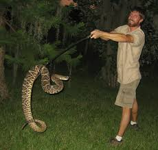 eastern diamondback rattlesnake in orlando fl