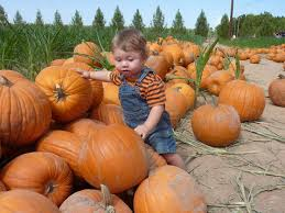 Pumpkin Patch Yuma Az Hours by 54 Best Missing Az Images On Pinterest Scenery Apache Junction