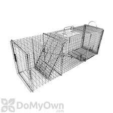 live cat trap pro rigid live trap flush mount for raccoon feral cat woodchuck