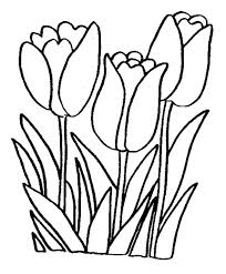 Tulip Coloring Pages Tulips Page Free Printable