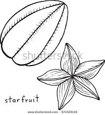 Starfruit Coloring Page Graphic Vector Black And White Art For Books Adults