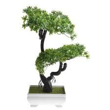 bonsai günstig kaufen kaufland de