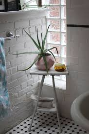 Plants In Bathroom Good For Feng Shui by Best Plants That Suit Your Bathroom Fresh Decor Ideas