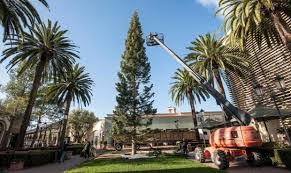 Crew Members From Victors Custom Christmas Trees Attach Support Lines To Fashion Islands 90 Foot Tall Tree Early On Tuesday Morning In Newport