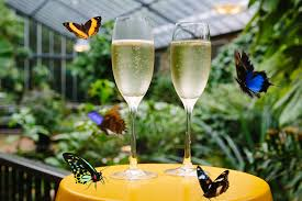 100 Butterfly House Melbourne Enjoy Bubbles With The Baboons At Zoo This Mothers Day
