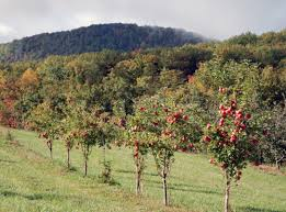 Patterson Pumpkin Patch Nc by Where To Pick Your Own Apples Pumpkins U0026 More Near Charlotte