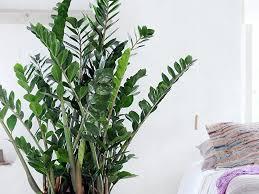 zimmerpflanzen mindern schadstoffe und lärm berlin de