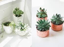 entretien plante grasse d interieur la succulente plante grasse mademoiselle claudine le