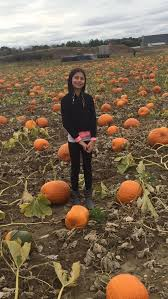 Johnson Farms Pumpkin Patch by 5 Places To Pick Your Own Pumpkin This Year Community