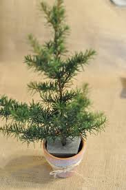 Potted Christmas Tree by Craftily Ever After Pottery Barn Inspired Potted Pines