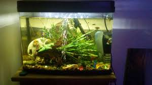 Extra Large Aquarium Decorations by The Best Way To Set Up A Tropical Freshwater Aquarium Wikihow