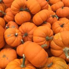 Goebbert Pumpkin Patch In Barrington Il by Goebbert U0027s Farm U0026 Garden Center 322 Photos U0026 206 Reviews