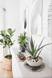 pflegeleichte zimmerpflanzen pflanzen für jeden raum