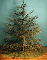 Are Christmas Tree Needles Toxic To Dogs by Why Rent A Tree This Holiday Season U2014 Our City Forest