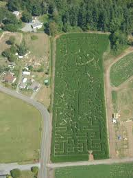 Sauvies Island Pumpkin Patch Corn Maze by 185 Best Mazes Images On Pinterest Corn Maze Pumpkin Patches