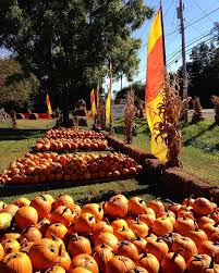 Pumpkin Picking Nyc 2014 by Jackson U0027s Pumpkin Farm Pumpkin Patches 6425 Rte 17c Endicott