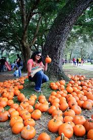 Pumpkin Patch Louisburg Nc by 164 Best Grand Old Oak Trees Images On Pinterest Nature Canopy